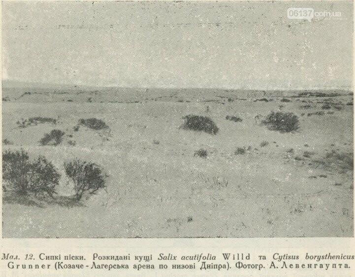 На территорії Приморська  збереглися рідкісні рослини минулого сторіччя, фото-1