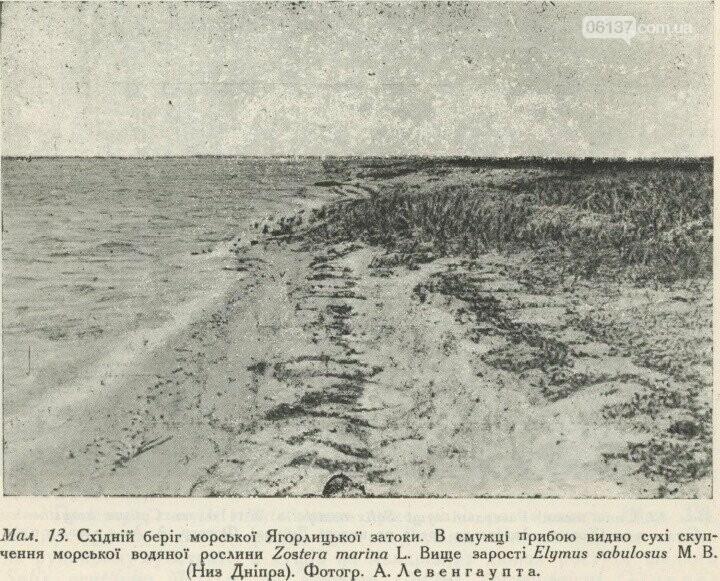 На территорії Приморська  збереглися рідкісні рослини минулого сторіччя, фото-2