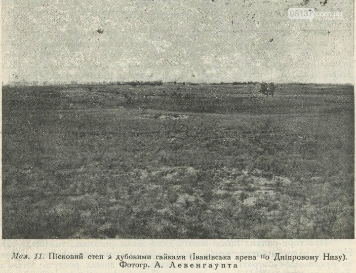 На территорії Приморська  збереглися рідкісні рослини минулого сторіччя, фото-4