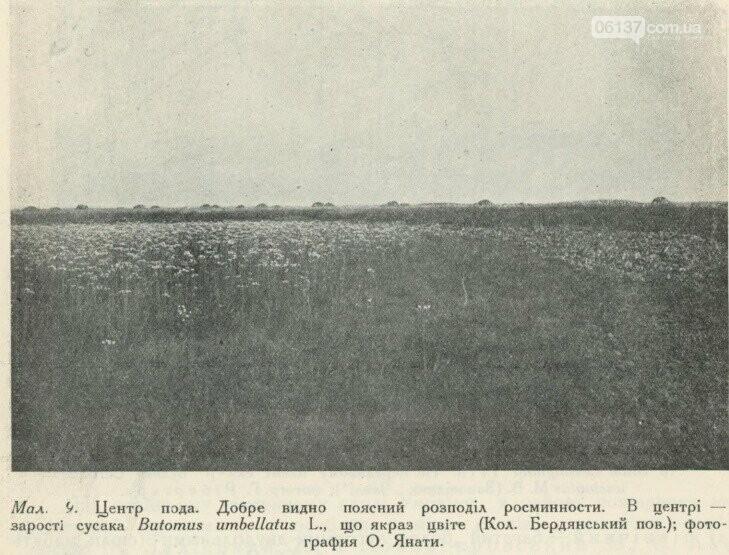 На территорії Приморська  збереглися рідкісні рослини минулого сторіччя, фото-5
