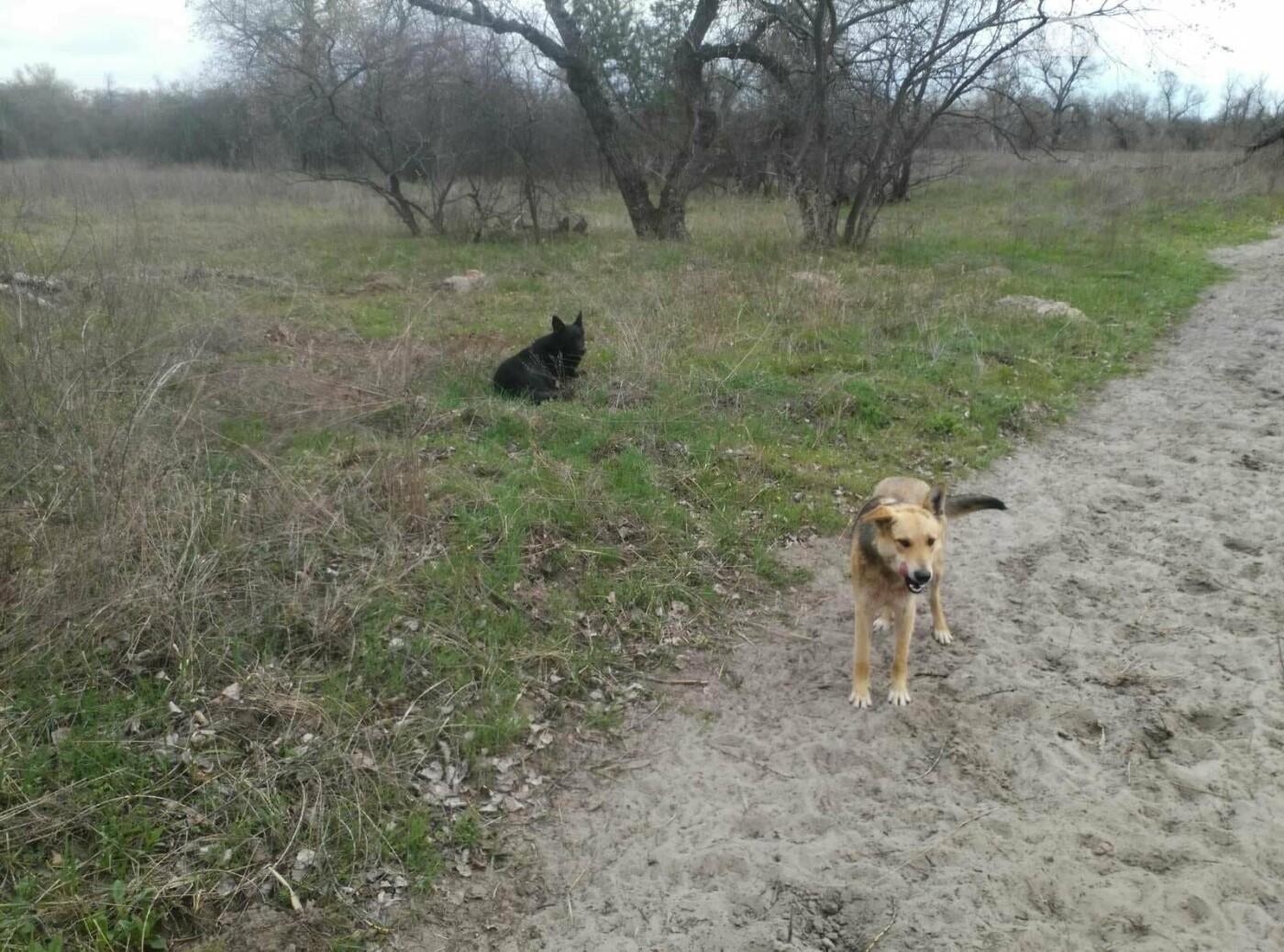 На Хортице бездомные собаки уничтожают животных. Жуткие кадры , фото-4