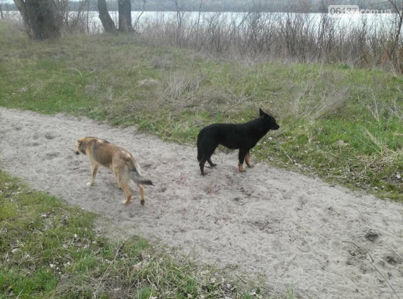 На Хортице бездомные собаки уничтожают животных. Жуткие кадры , фото-5