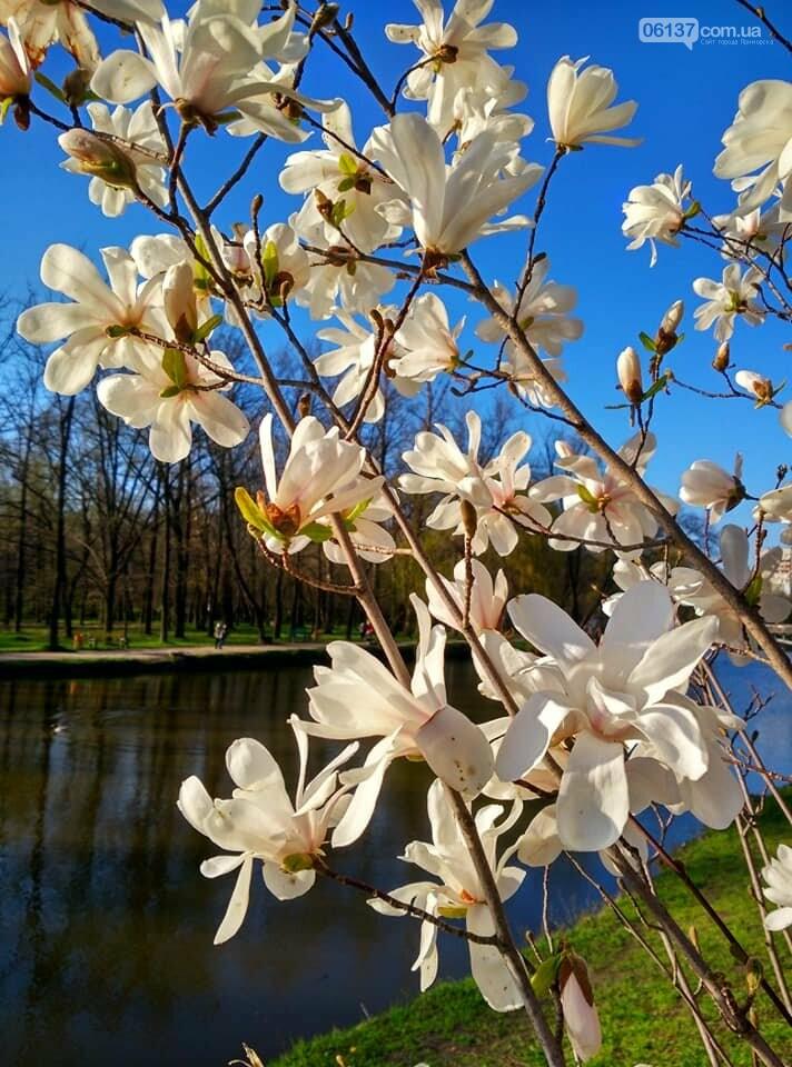 Красота вокруг: в Запорожье цветут магнолии. Фоторепортаж , фото-18