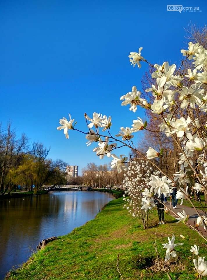 Красота вокруг: в Запорожье цветут магнолии. Фоторепортаж , фото-19