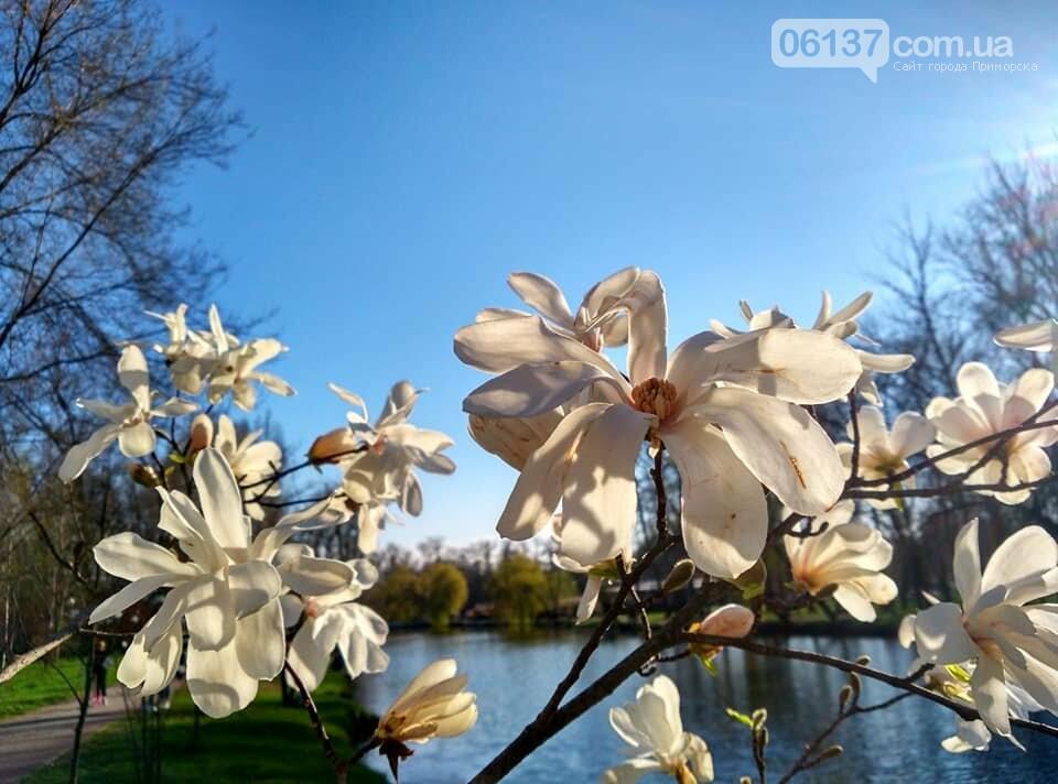 Красота вокруг: в Запорожье цветут магнолии. Фоторепортаж , фото-20