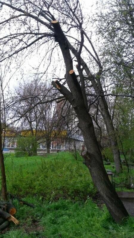 В Хортицком районе Запорожья коммунальщики варварски пилят цветущие деревья. Фото, фото-1