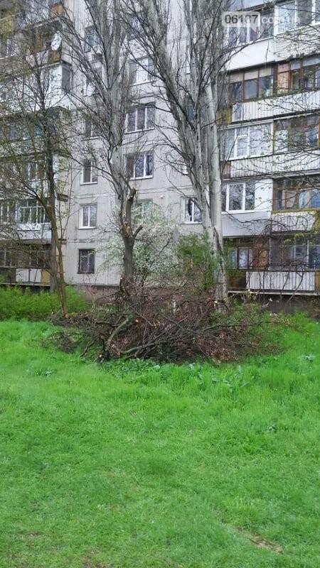 В Хортицком районе Запорожья коммунальщики варварски пилят цветущие деревья. Фото, фото-2