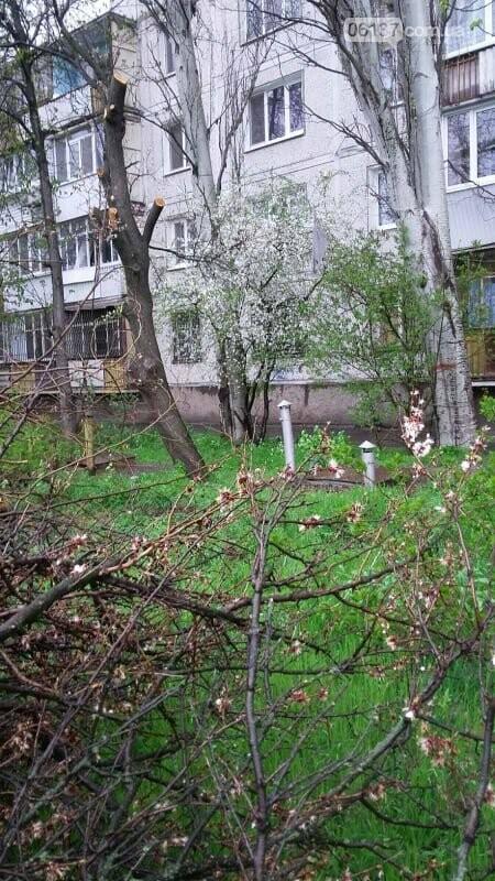 В Хортицком районе Запорожья коммунальщики варварски пилят цветущие деревья. Фото, фото-5