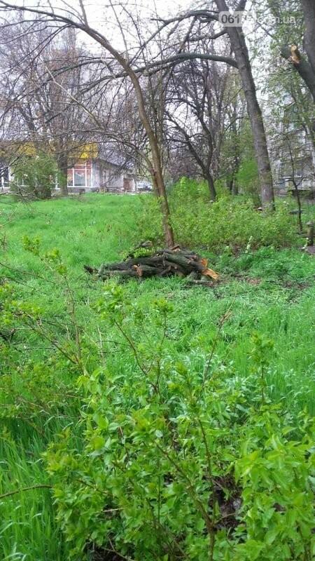 В Хортицком районе Запорожья коммунальщики варварски пилят цветущие деревья. Фото, фото-6