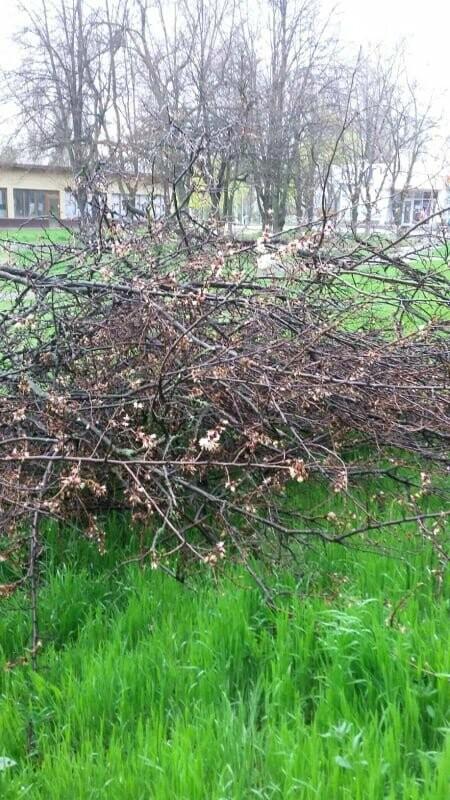 В Хортицком районе Запорожья коммунальщики варварски пилят цветущие деревья. Фото, фото-7