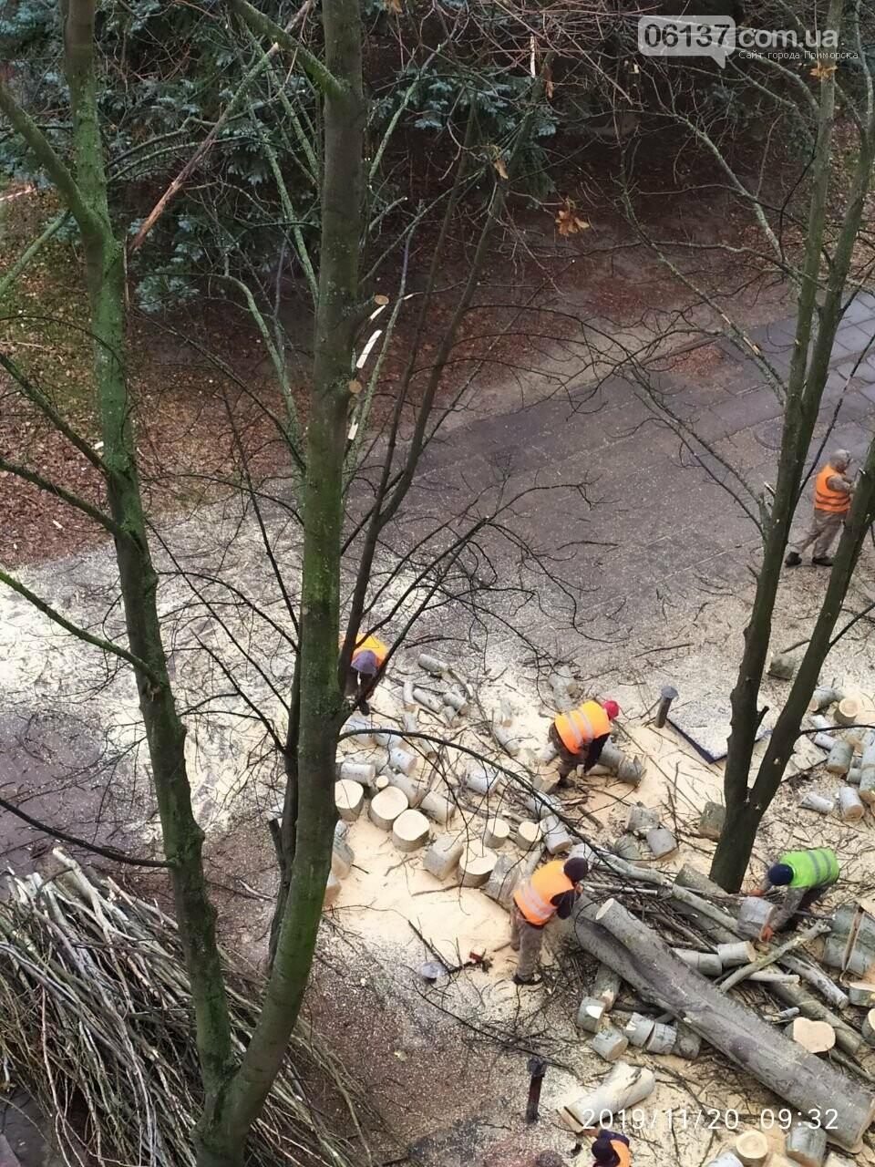 В Хортицком районе Запорожья коммунальщики варварски пилят цветущие деревья. Фото, фото-8