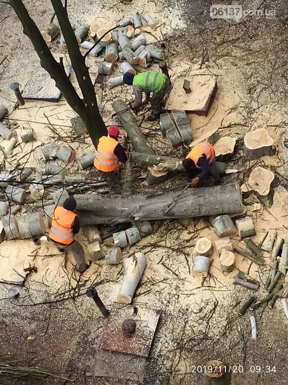 В Хортицком районе Запорожья коммунальщики варварски пилят цветущие деревья. Фото, фото-9