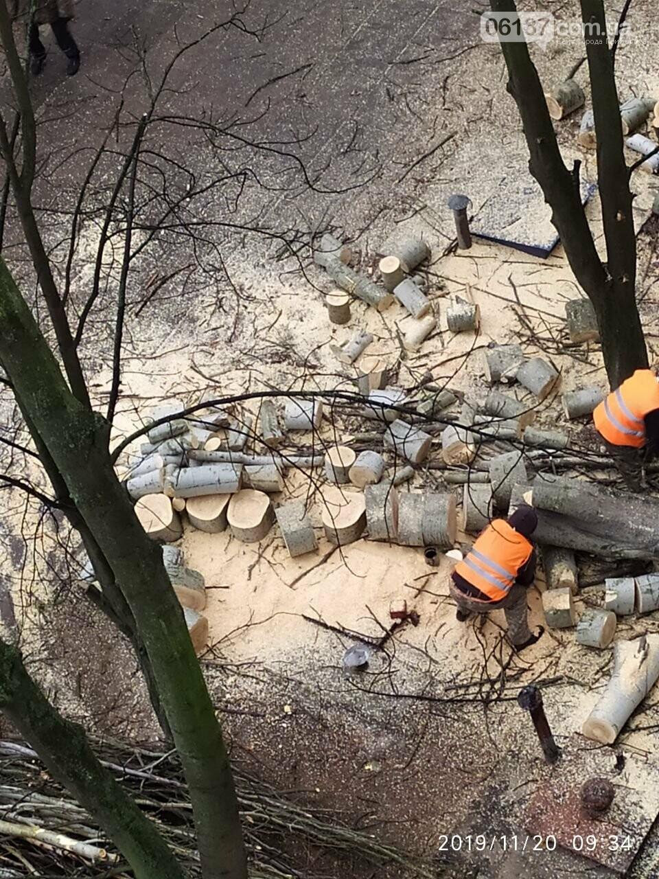 В Хортицком районе Запорожья коммунальщики варварски пилят цветущие деревья. Фото, фото-10