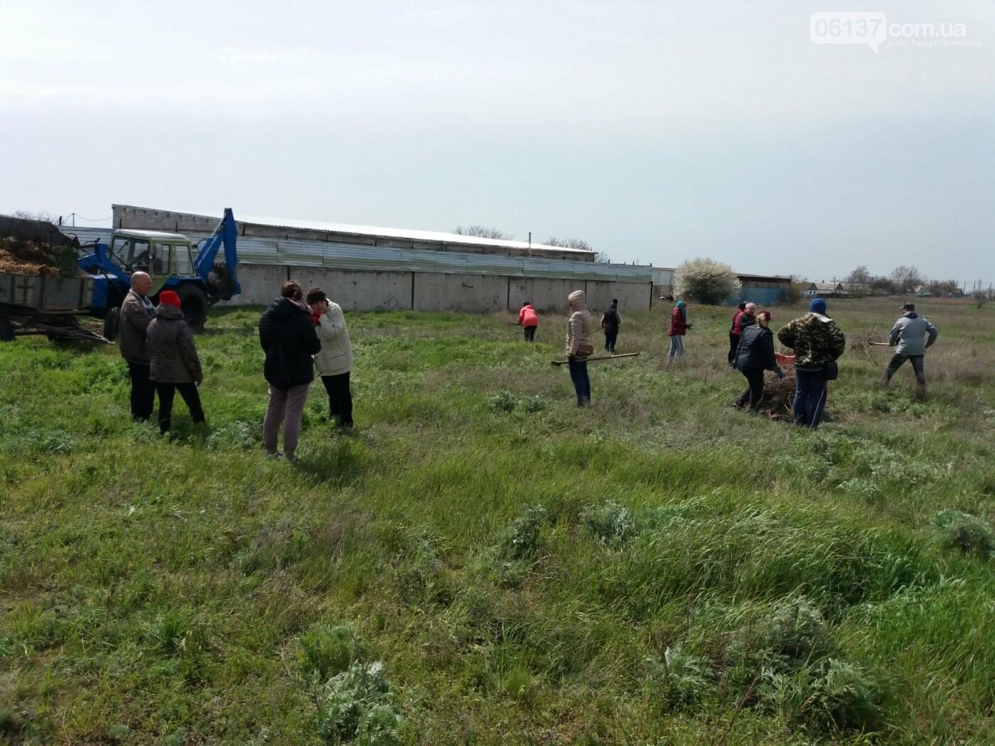 В Приморську пройшла велика всеміська толока, фото-3