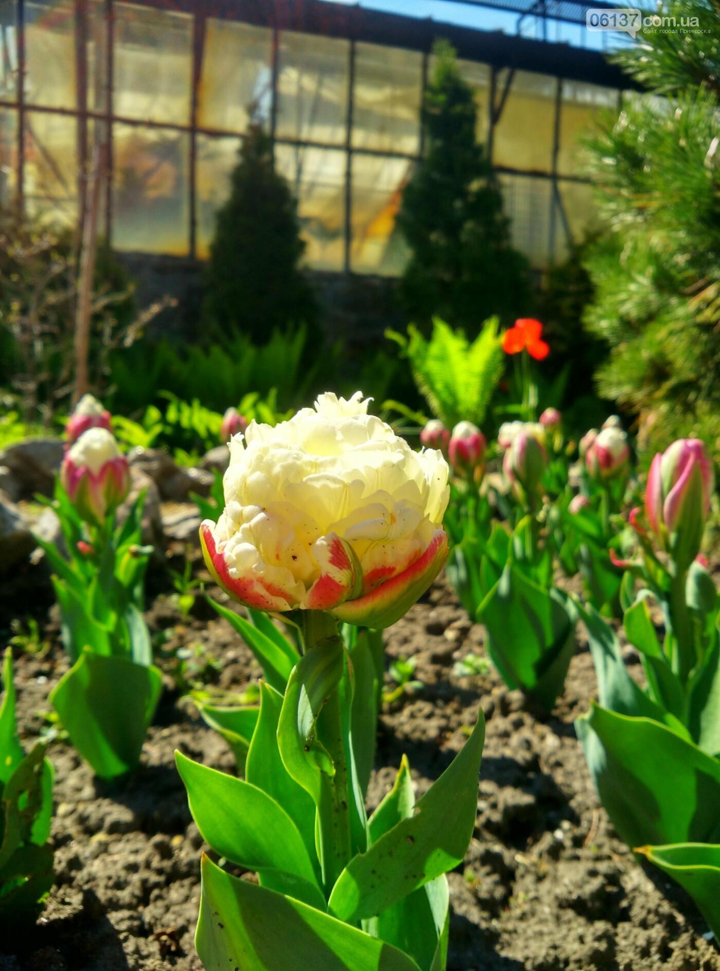 В запорожском ботсаду завершается самое буйное весеннее цветение. Фото , фото-6