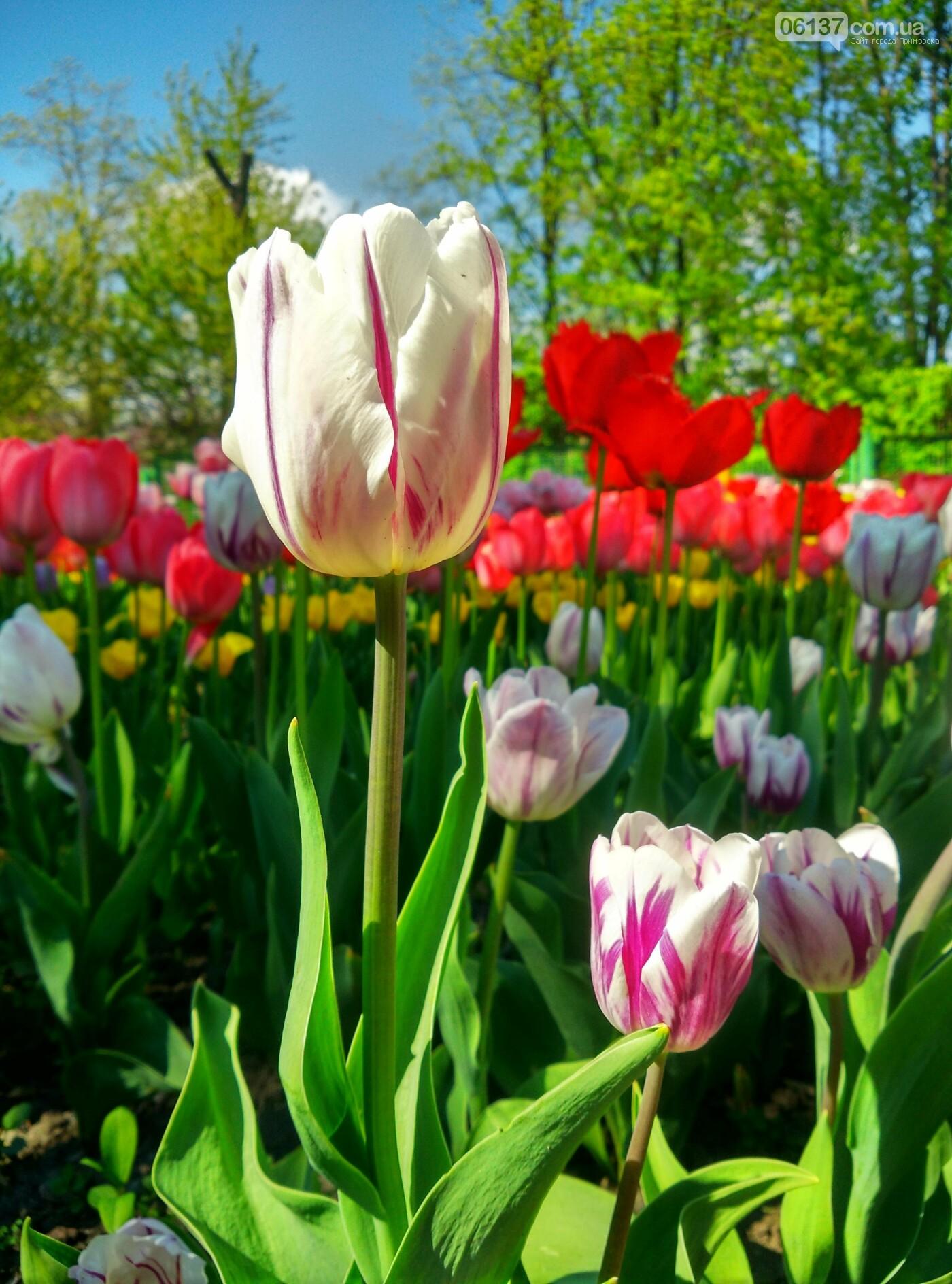 В запорожском ботсаду завершается самое буйное весеннее цветение. Фото , фото-20