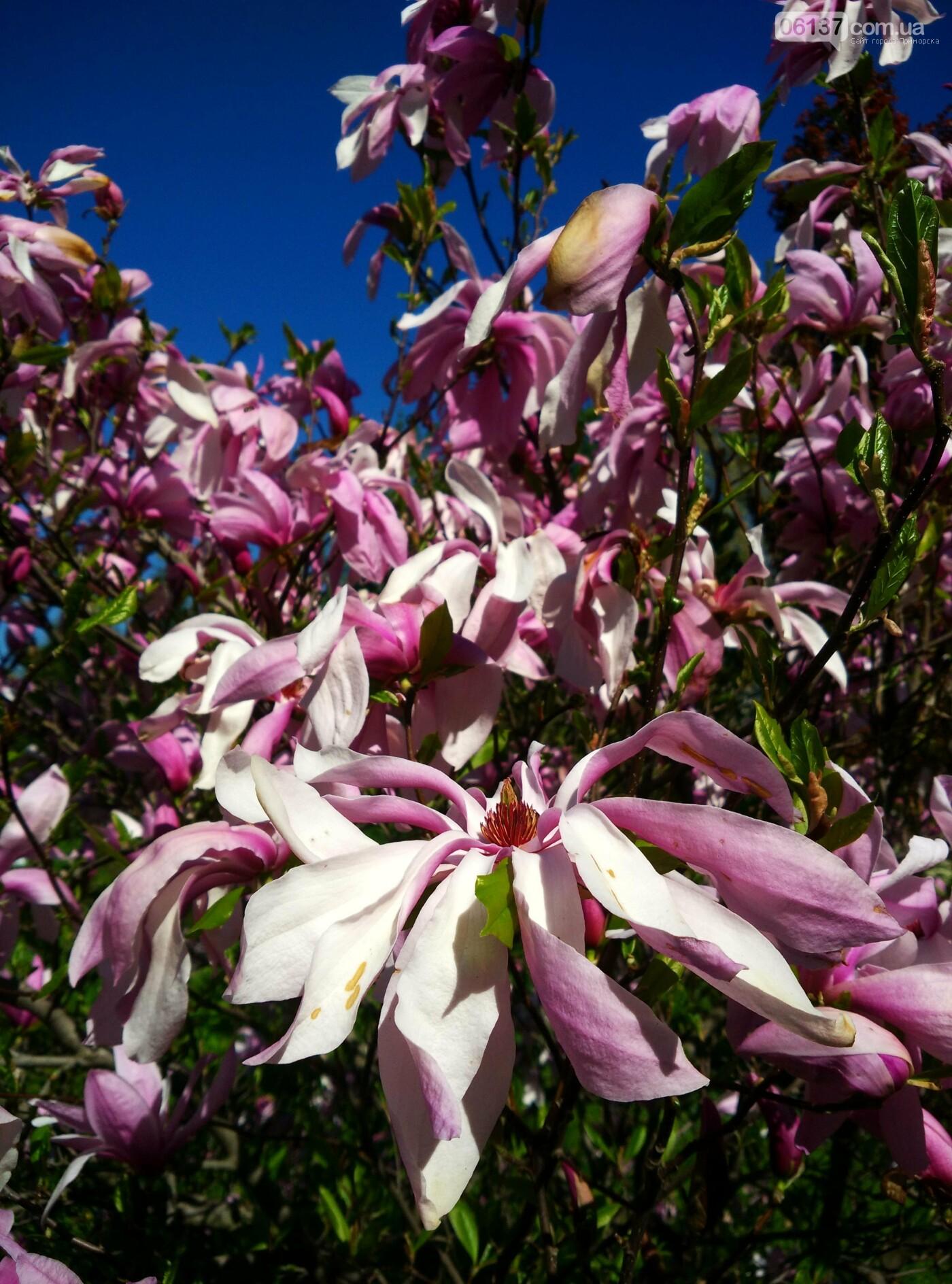 В запорожском ботсаду завершается самое буйное весеннее цветение. Фото , фото-29