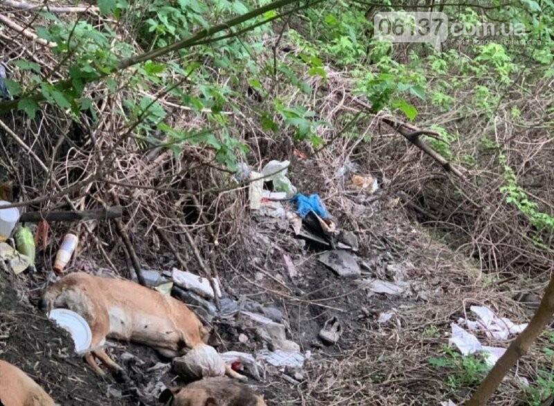 В Запорожье женщина сбила собаку и бросила умирать: объявлен сбор средств для спасения животного. Фото, фото-2