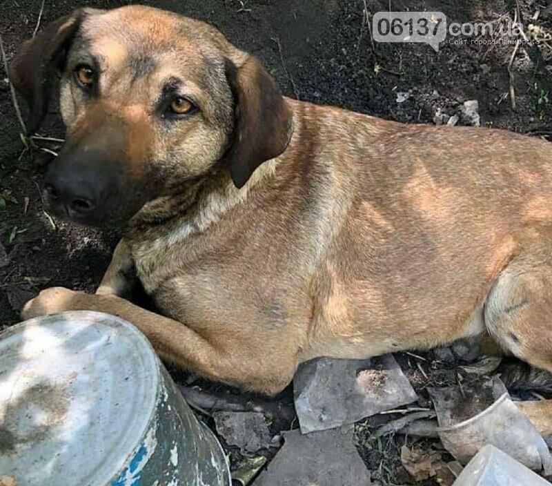 В Запорожье женщина сбила собаку и бросила умирать: объявлен сбор средств для спасения животного. Фото, фото-1