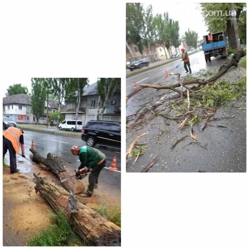 ЧП на проезжей части: в Запорожье сильный ветер повалил деревья. Фото , фото-1