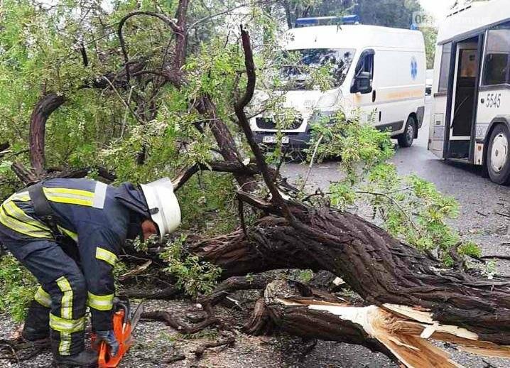 В Запорожье муниципальный автобус протаранил дерево. Фото, фото-2