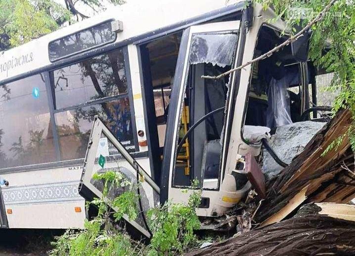 В Запорожье муниципальный автобус протаранил дерево. Фото, фото-1